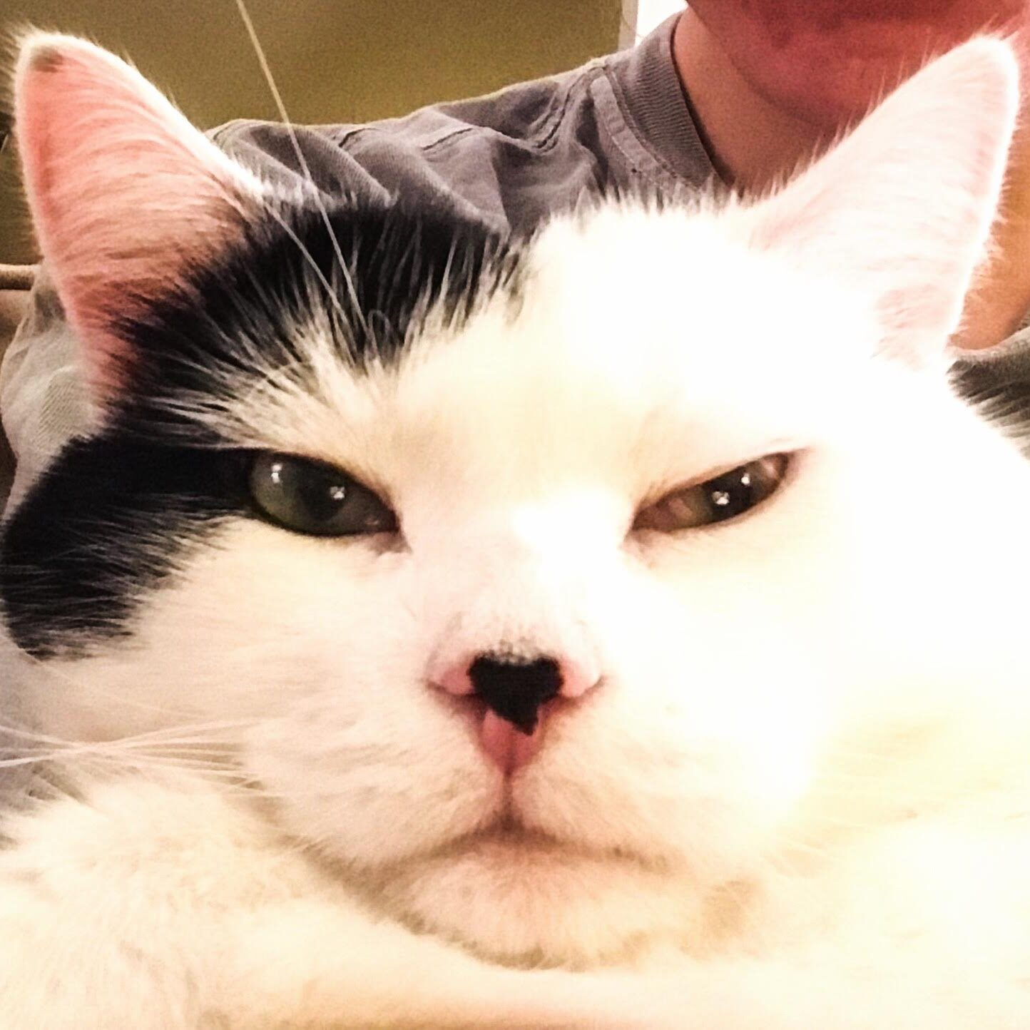 Stanley cat looking at camera | hearth health happiness