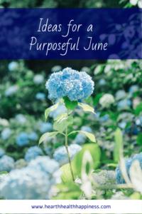 Monday Motivation: Hydrangea Garden | Photo byTunafish MayonnaiseonUnsplash