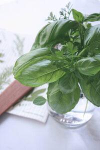 herbs in glass jar | hearth health happiness